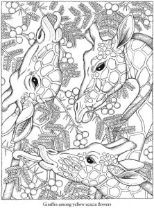 Desenhos Para Colorir Adultos Girafas 222x300 So Escola