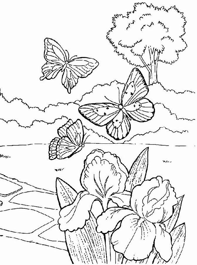 Desenhos da primavera para colorir s escola - Primavera uccelli primavera colorazione pagine ...