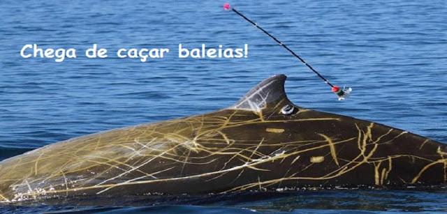 Interpretação de texto: Chega de caçar baleias!