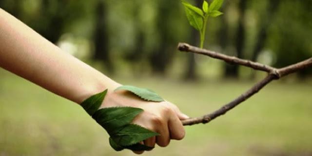 Confira Atividades para Imprimir para trabalhar o Meio Ambiente com alunos do 3º Ano.
