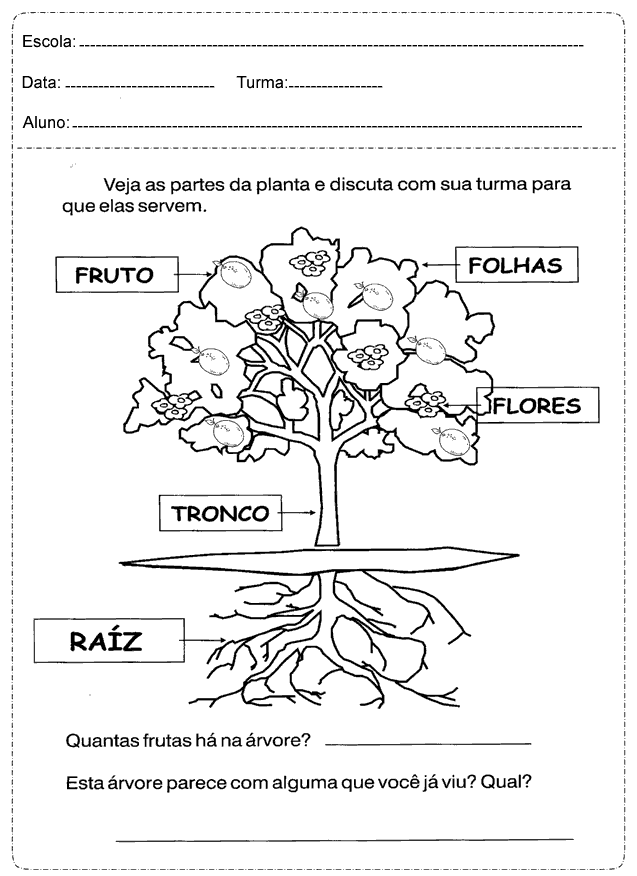 Plano de Aula As plantas 1 ano do Ensino Fundamental - Para Imprimir.