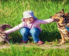 Os animais de estimação são bons para crianças com autismo
