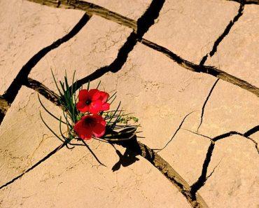 Resiliência: O aprendizado que nasce da superação