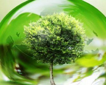 Músicas sobre o meio ambiente