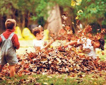 A importância do contato com a natureza e da educação ambiental na educação infantil