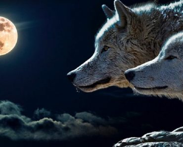 A parábola dos dois lobos