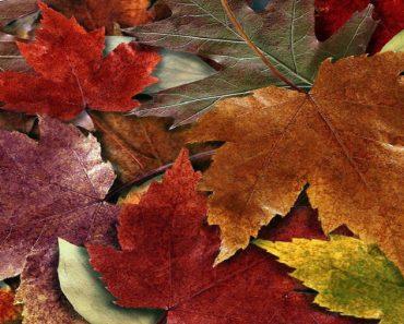 Arte com folhas para o Dia da Arvore na escola