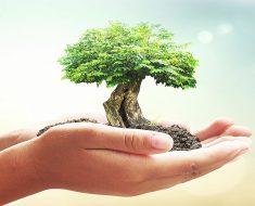 20 atividades sobre Meio Ambiente