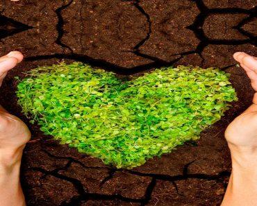 Projeto meio ambiente na escola para series iniciais