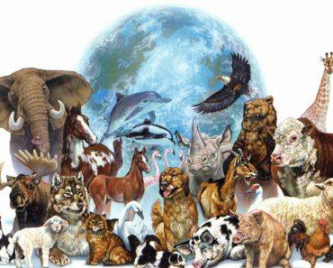 Projeto animais para educação infantil