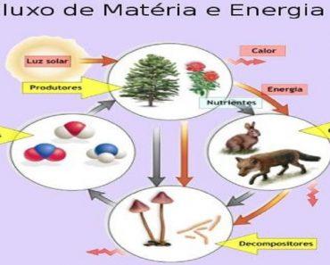 Fluxo de Matéria e Energia na Cadeia Alimentar