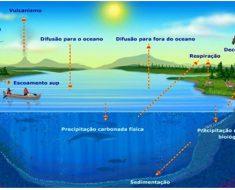 A energia térmica e o ciclo do carbono