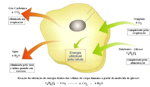 O equilíbrio de matéria no corpo humano