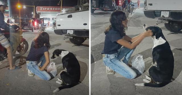 Casal alimenta cães vadios durante quarentena. Eles estão mais abandonados do que antes.